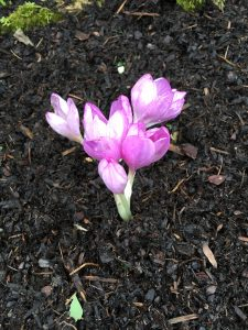 花が咲き始めた。